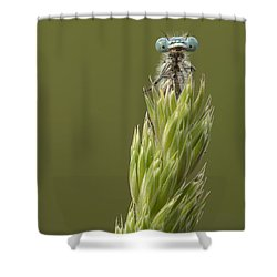Animal Shower Curtain by Andy Astbury