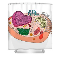Animal Cell Diagram Shower Curtain by Science Source