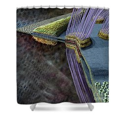 Animal Cell Junctions Shower Curtain by Russell Kightley
