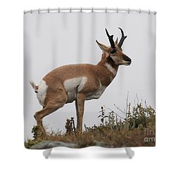 Antelope Critiques Photography Shower Curtain