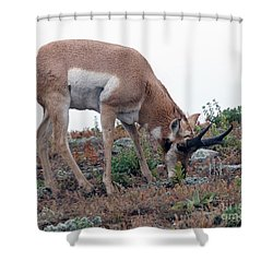 Shower Curtain featuring the photograph Antelope Grazing by Art Whitton