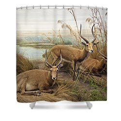 Antelope In The Grass Near The River Shower Curtain by Laura Ciapponi