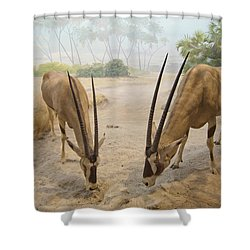 Antelope In The Sand With Their Heads Shower Curtain by Laura Ciapponi