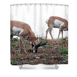 Shower Curtain featuring the photograph Antelopes Grazing by Art Whitton