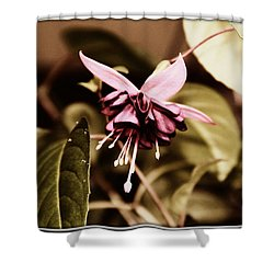 Shower Curtain featuring the photograph Antiqued Fuchsia by Jeanette C Landstrom