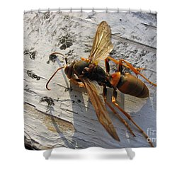 Apache Red Wasp Shower Curtain by Mark Robbins