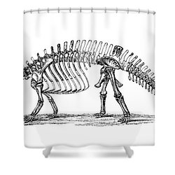 Apatosaurus Excelsus,  Aka Brontosaurus Shower Curtain by Science Source