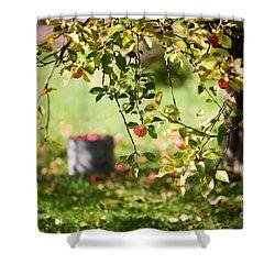 Apple Tree Shower Curtain by Kati Molin