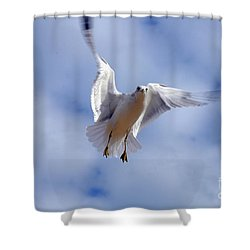 Shower Curtain featuring the photograph Applying Brakes In Flight by Clayton Bruster