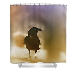 April Raven Shower Curtain by Susan Capuano