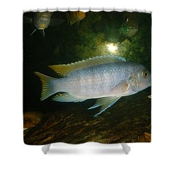 Shower Curtain featuring the photograph Aquarium Life by Bonfire Photography