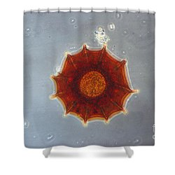 Arcella Dentata Lm Shower Curtain by Eric V. Grave