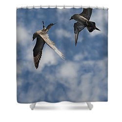 Arctic Skuas Shower Curtain by Andy Astbury