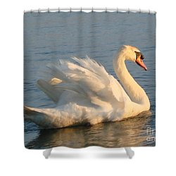 Are You Looking... Shower Curtain