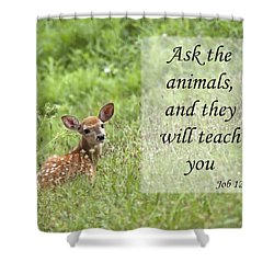 Shower Curtain featuring the photograph Ask The Animals by Jeannette Hunt