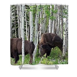 Aspen Bison Shower Curtain by Bill Stephens