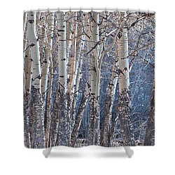 Shower Curtain featuring the photograph Aspen Grove by Colleen Coccia