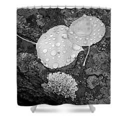 Aspen Leaves In The Rain Shower Curtain by Dorrene BrownButterfield