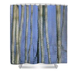 Aspen Poplar Trees Reflected In Spring Shower Curtain by Darwin Wiggett