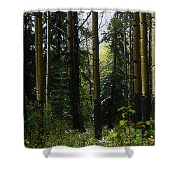 Aspens Banff National Park Shower Curtain