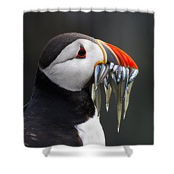 Atlantic Puffin Fratercula Arctica Shower Curtain by Wim Klomp