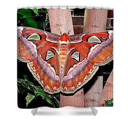 Atlas Moth Shower Curtain