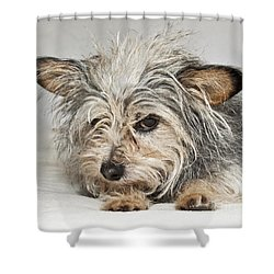 Attitude Shower Curtain by Jeannette Hunt