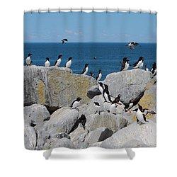 Auk Island Shower Curtain by Bruce J Robinson