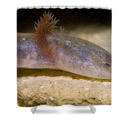 Austin Blind Salmander Shower Curtain by Dante Fenolio
