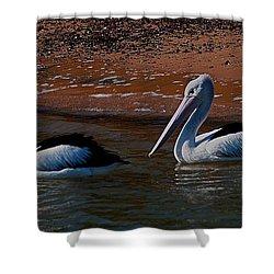 Australian Pelicans Shower Curtain