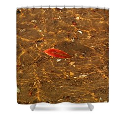 Autumn Afloat Shower Curtain by Rachel Cohen