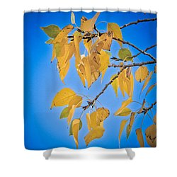 Autumn Aspen Leaves And Blue Sky Shower Curtain by James BO  Insogna