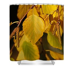 Autumn Birch In Southern Oregon Shower Curtain by Mick Anderson