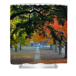 Autumn Canopy Shower Curtain by Lisa Phillips