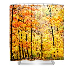 Shower Curtain featuring the photograph Autumn Forest by Randall Branham