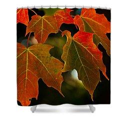 Autumn Glory Shower Curtain by Cheryl Baxter