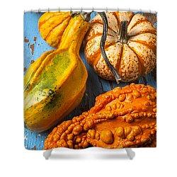 Autumn Gourds Still Life Shower Curtain