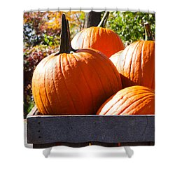 Autumn Harvest Shower Curtain by Julia Wilcox