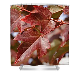 Autumn In My Back Yard Shower Curtain by Mick Anderson
