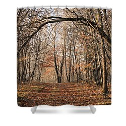 Shower Curtain featuring the photograph Autumn In The Woods by Penny Meyers
