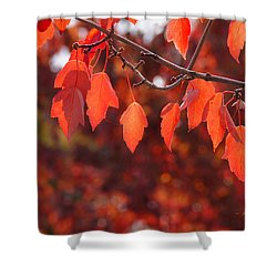 Autumn Leaves In Medford Shower Curtain by Mick Anderson