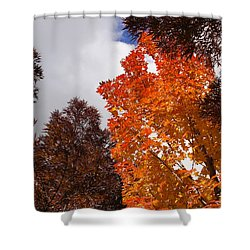 Autumn Looking Up Shower Curtain by Mick Anderson
