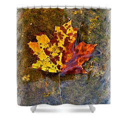 Shower Curtain featuring the digital art Autumn Maple Leaf In Water by Debbie Portwood