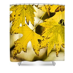 Autumn Maple Leaves Shower Curtain by James BO  Insogna