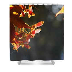 Autumn Maple Shower Curtain by Mick Anderson