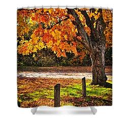 Autumn Maple Tree Near Road Shower Curtain by Elena Elisseeva
