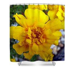 Autumn Marigold 1 Shower Curtain by Alys Caviness-Gober