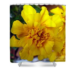 Autumn Marigold 2 Shower Curtain by Alys Caviness-Gober