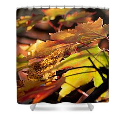 Autumn Morning Shower Curtain by David Troxel