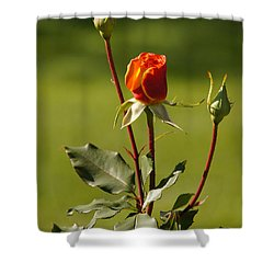 Autumn Rose Shower Curtain by Mick Anderson